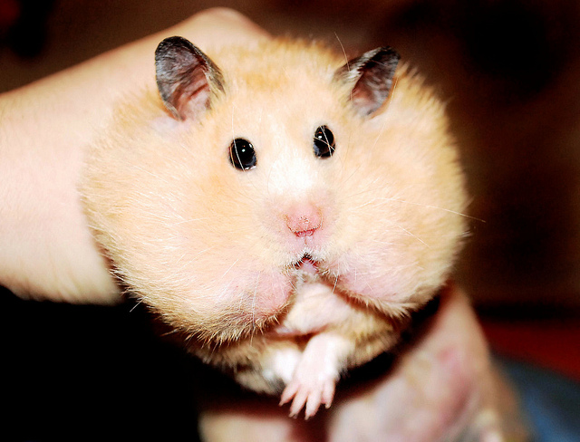 funny hamster pictures for kids - photo #5