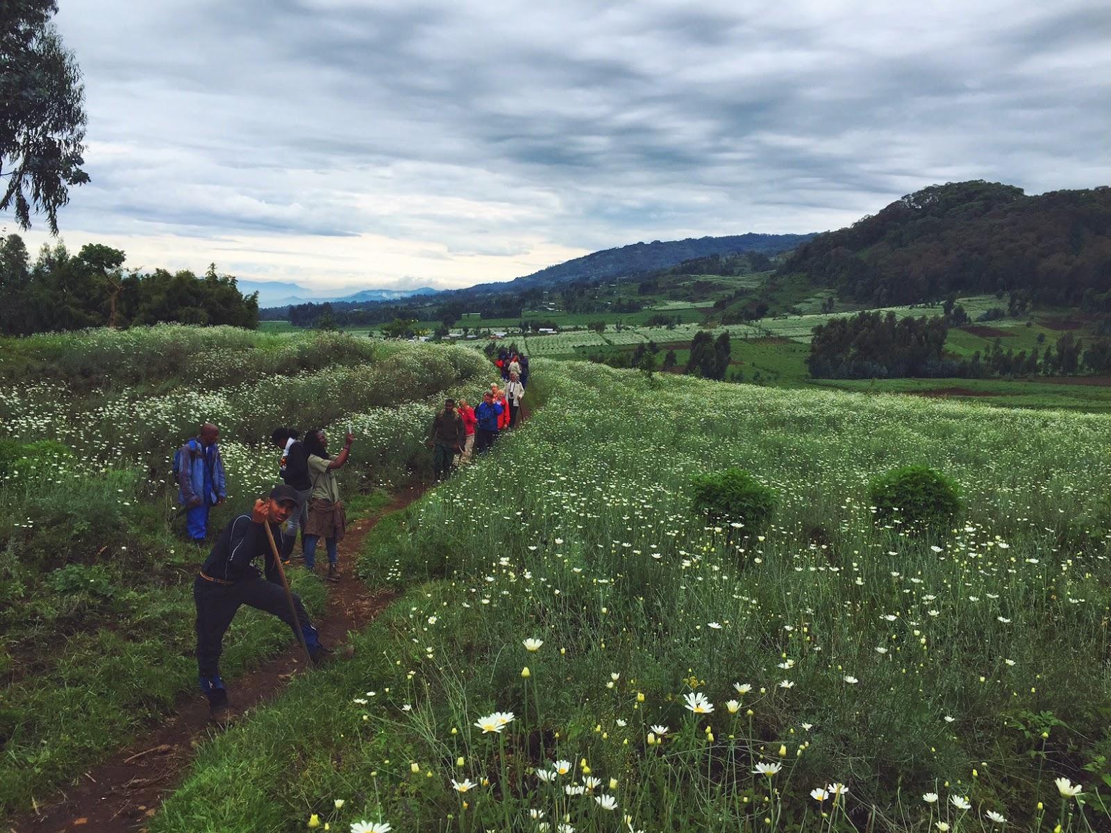 amahoro family mountain gorillas volcaoes national park rwanda africa trek