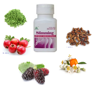 Herbal Pelangsing Alami
