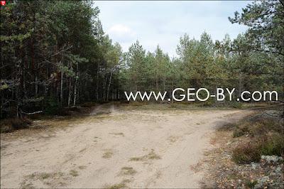 Налибокская пуща у деревни Заборье. Лесной перекресток