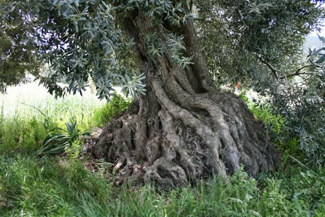 Ποία είναι τα ανακηρυγμένα μνημεία της φύσης στην Αργολίδα
