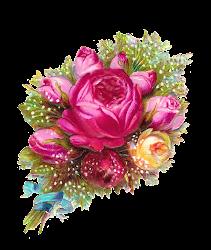 transparent flowers bouquet pink roses rose flower digital background ribbon scrapbooking clip birthday antiqueimages