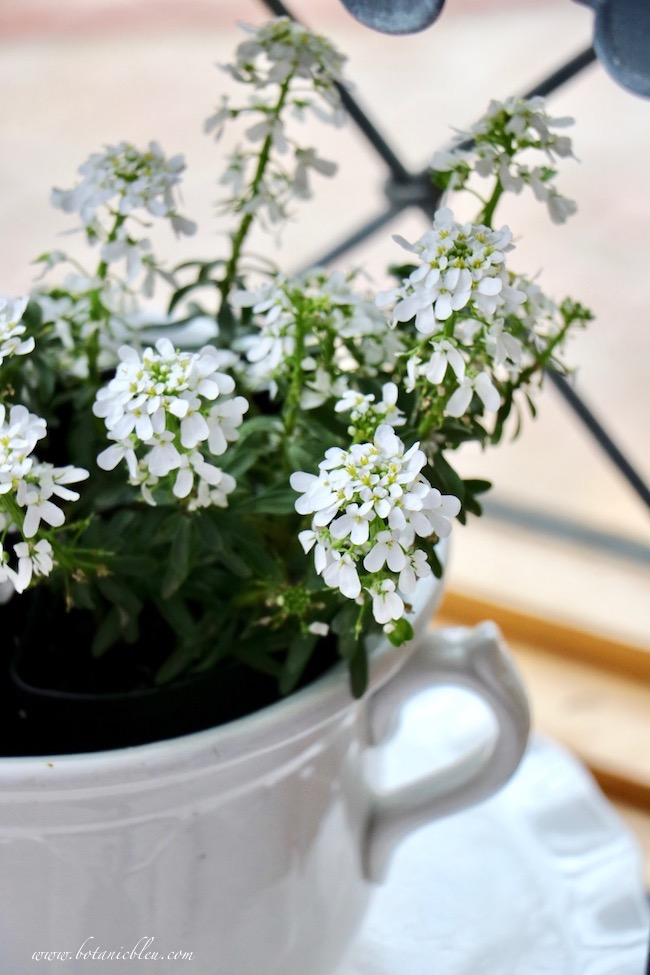 White Stoneware With White Candytuft Decor