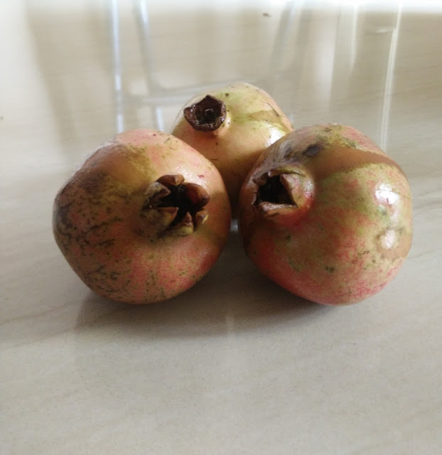 Photo / Picture of Pomegranate Fruit