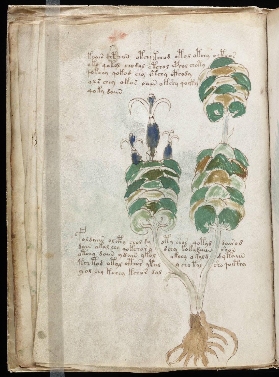 manuscrito026