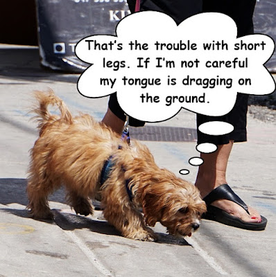 http://dogsarefun.club/2016/07/06/the-trouble-with-short-legs/