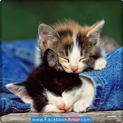 fotografías de gatos