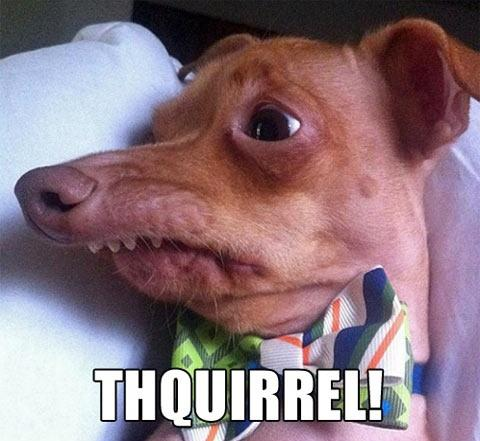 Funny Dog Captions - Thquirrel Squirrel