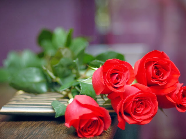 HD Wallpapers Red Rose Wallpapers
