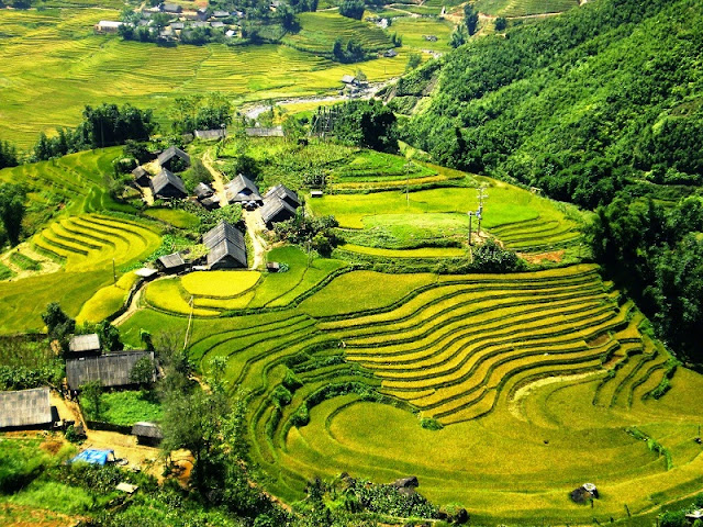 Admire Sapa in golden rice terraces season