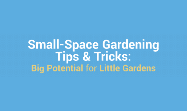 Small-Space Gardening Tips and Tricks