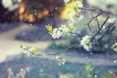 Tháng giêng mùa xuân chưa kịp về