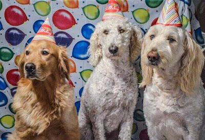 dog party,dog,dog birthday party,pet party,pet birthday party,dog party treats,dog party gifts,dog shower,puppy shower,pamper dog,dog treat bag,dog gift basket,dog party supplies,dog party wear