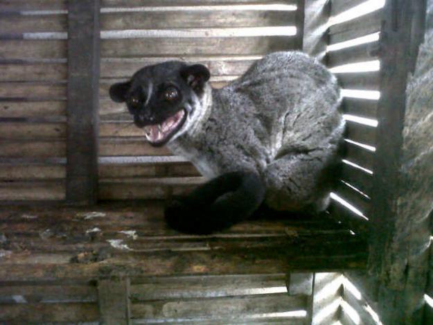 My Pet Jogjakarta: June 2013