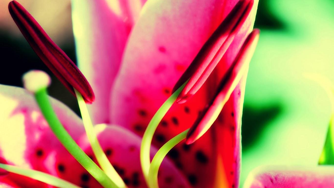 Hình nền hoa cho desktop full HD