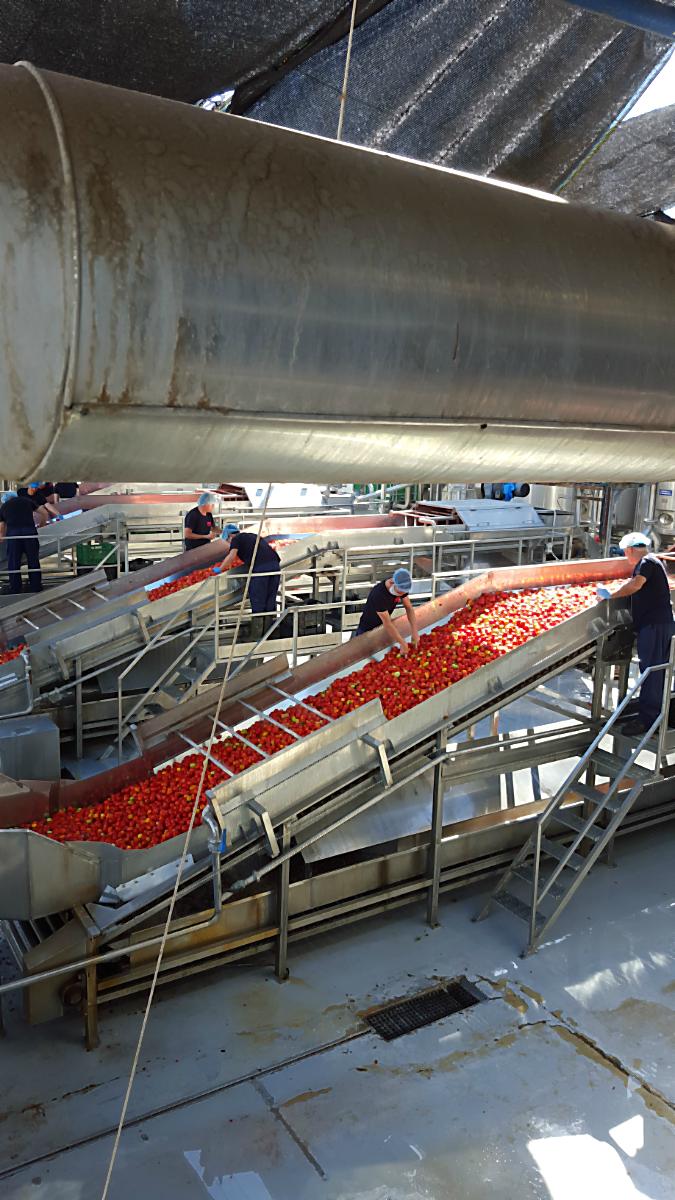 Tomatenwaschanlage bei Agraz | Arthurs Tochter Kocht von Astrid Paul