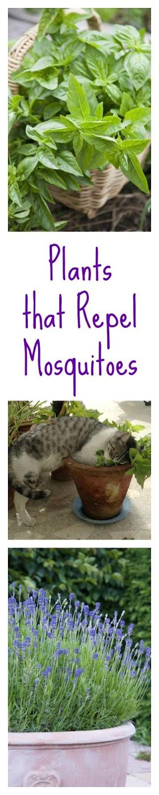Forget The Bug Zapperu2014you Can Keep Mosquitos Away With Garden Plants Like  Lavender And Basil. No More Pesky Bugs!