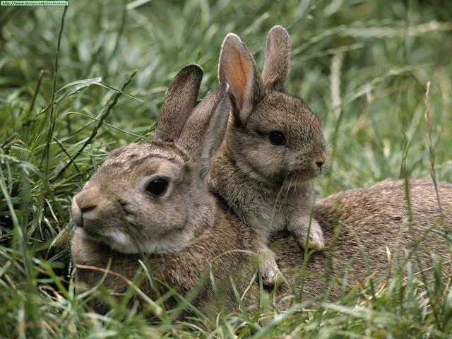 Advierten que Plan Conejo reedita viejas políticas que no acaban la escasez