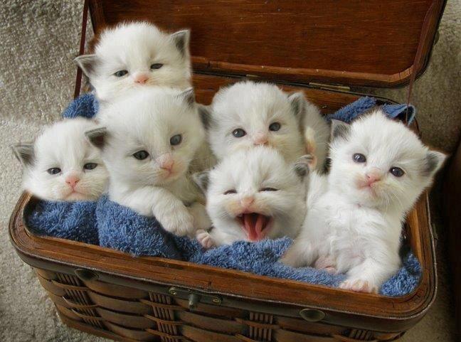 Gatitos lindos! - Mascotas Yep