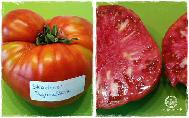 Gartenblog Topfgartenwelt Aussaat Tomatensorten Gartensaison 2018: regionale Tomatensorten auf dem Prüfstand - Stradner Regionalsorte