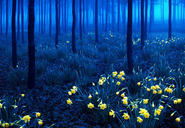 Almanya Kara Orman'dan gece görüntüsü