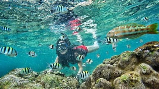 Waspadai 5 Hewan Laut Ini Saat Menyelam