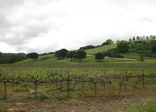 Grape vines with tree-studded green hills under cloudy skies, near Paso Robles, California