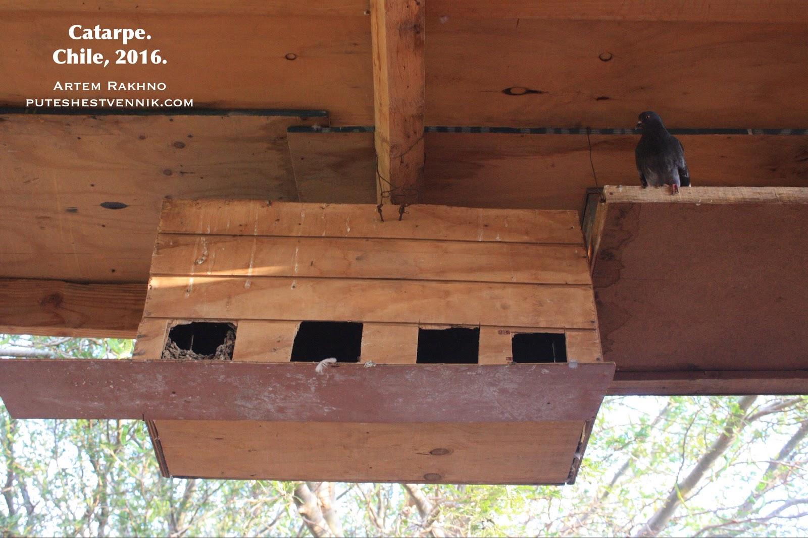 Чилийская кормушка для птиц