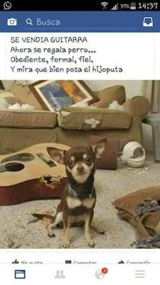 Se vendía guitarra, ahora se regala perro, obediente, formal, fiel, y mira qué bien posa el hijodeputa