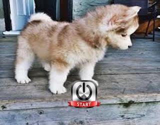dog barking trainer