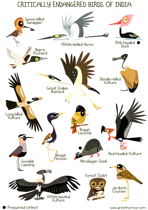 list of endangered animals in india with pictures pdf