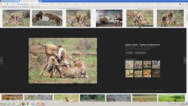 Магия биологии, вопрос почемучки, скрин экрана,  картинки львов, драка