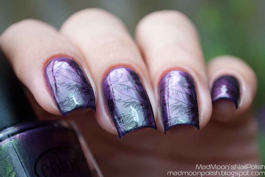 Stamping: Color Club Port-Folio + Lesly LS-12