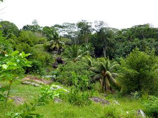 Jardin du Roy - Mahé - Seychelles