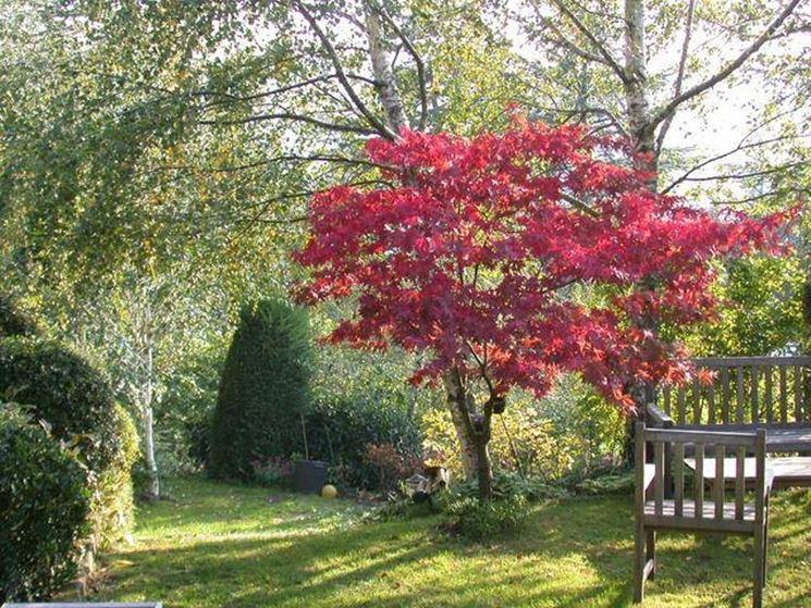 Piante da giardino con foglie rosse edilizia in un click