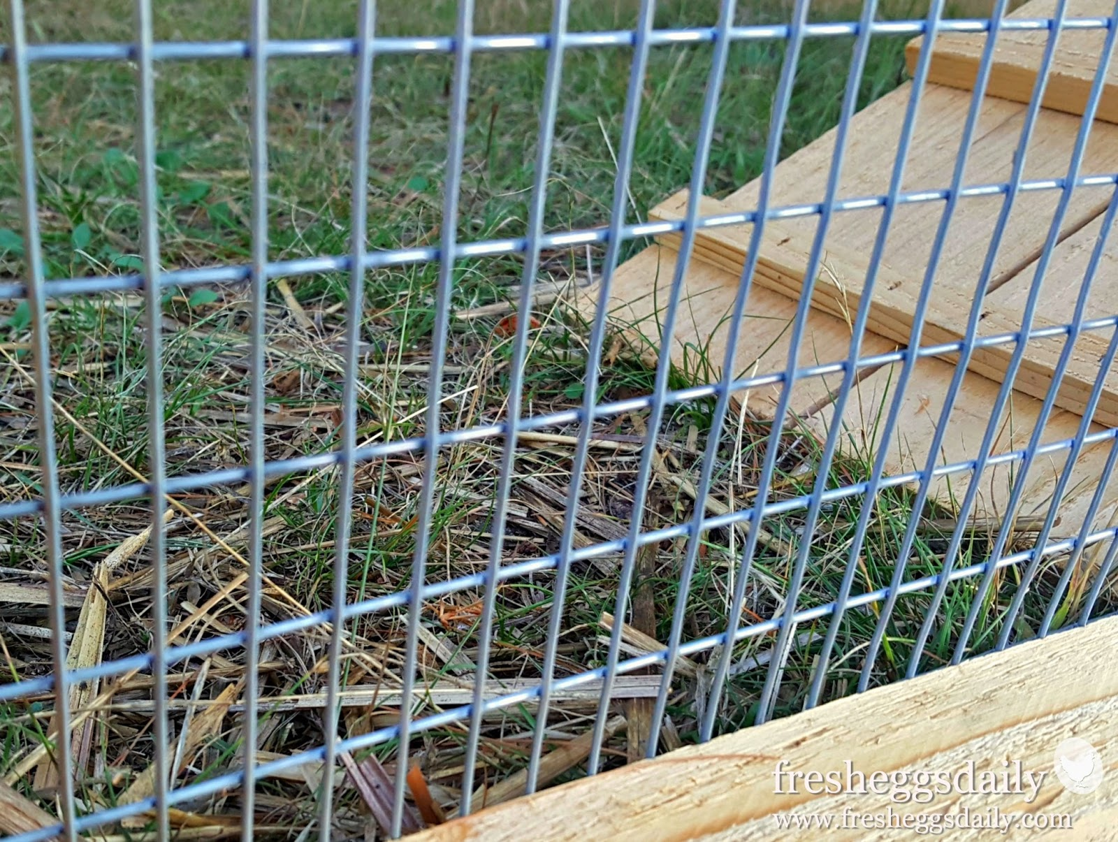 Choosing The Right Fencing For Your Chicken Coop, Run Or Garden | Fresh  Eggs Daily®