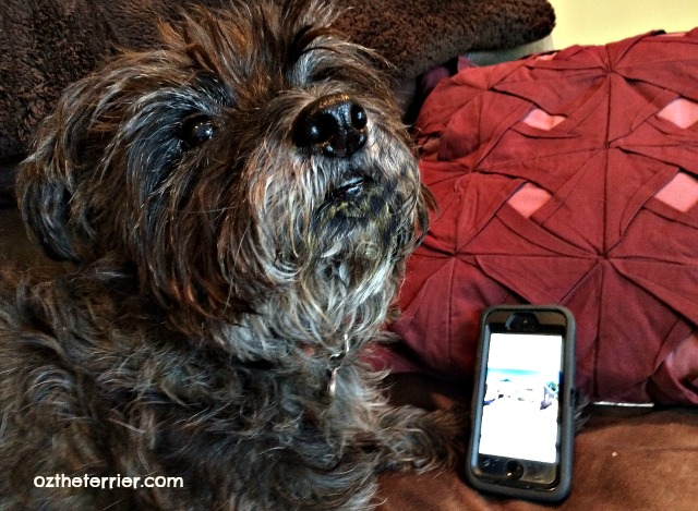 Oz the Terrier who takes more smartphone photos, cat or dog owners?