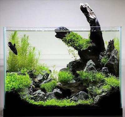 Desain Aquascape