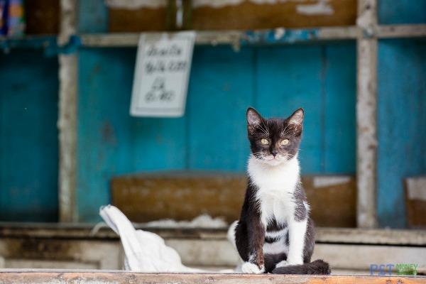 shop cat cuba