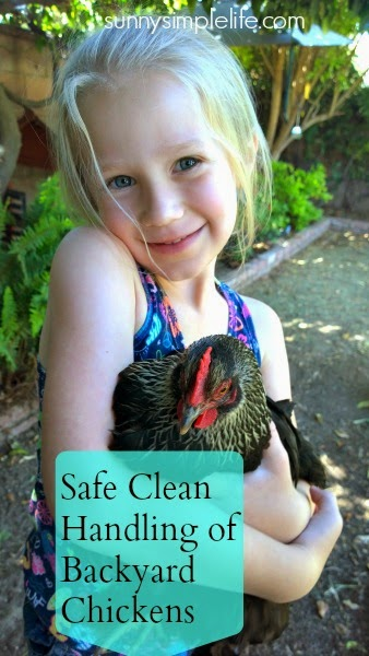 Safe Clean Handling of Backyard Chickens