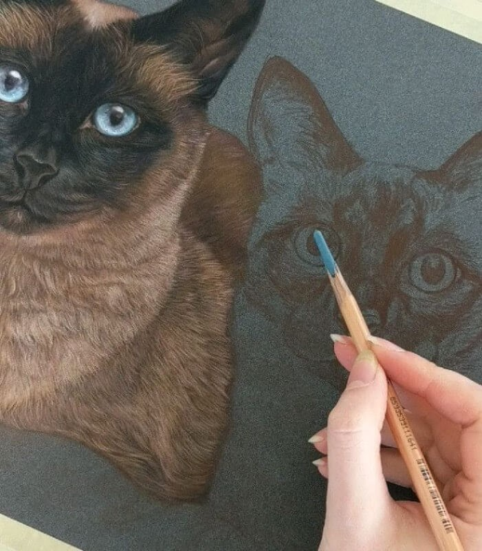 06-Siamese-Cats-WIP-Tatjana-Bril-Pastel-Drawings-of-Detailed-Animals-www-designstack-co