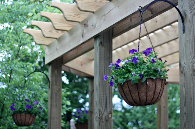 hanging basket flowers on pergola