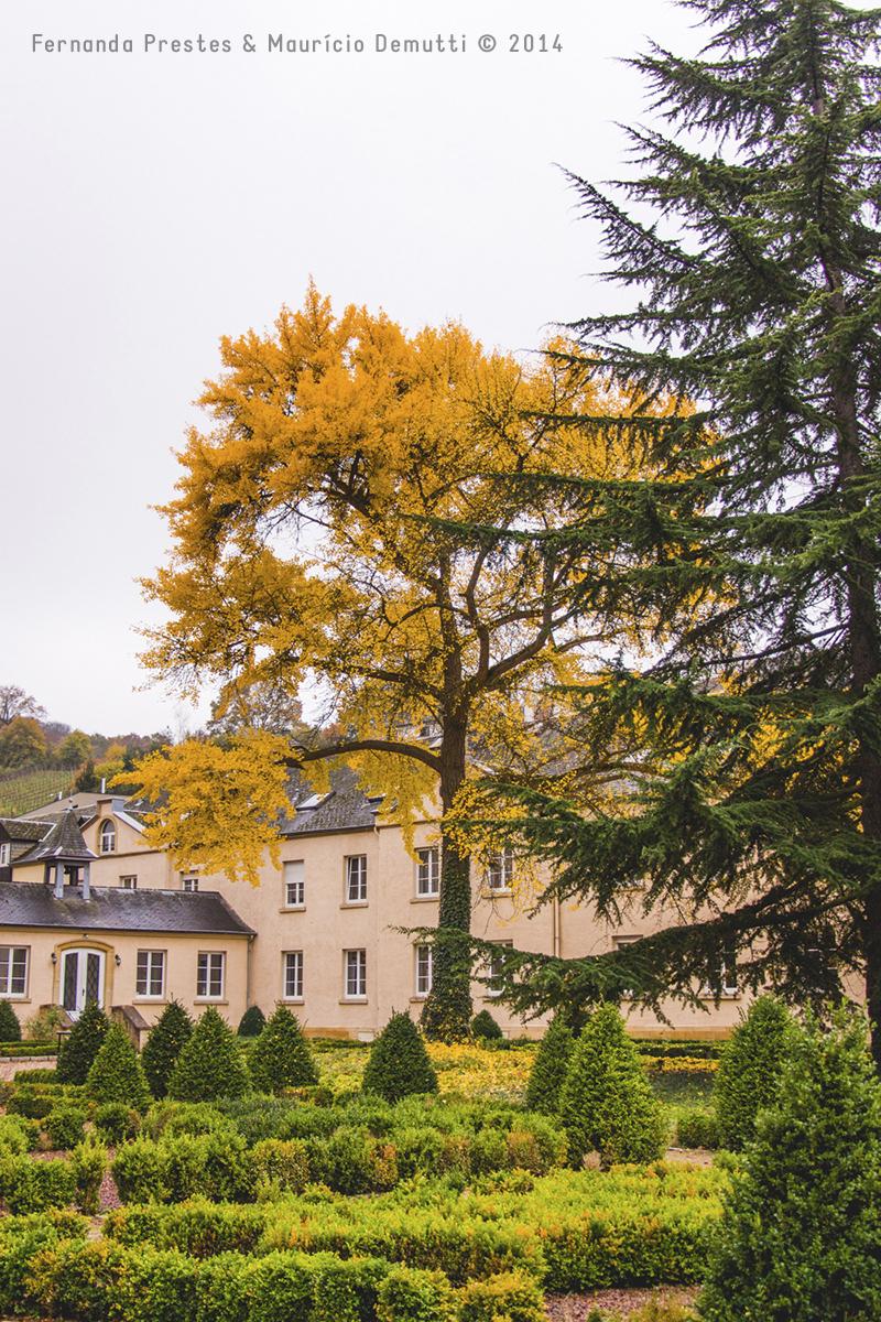 árvore amarela no outono