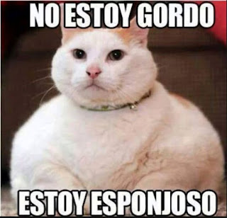 Memes de gordos y gordas causan gordura obesidad gato obeso esponjoso