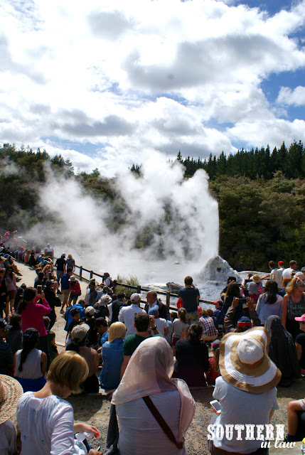 The Lady Knox Geyser Erupting at Wai-O-Tapu Thermal Wonderland New Zealand