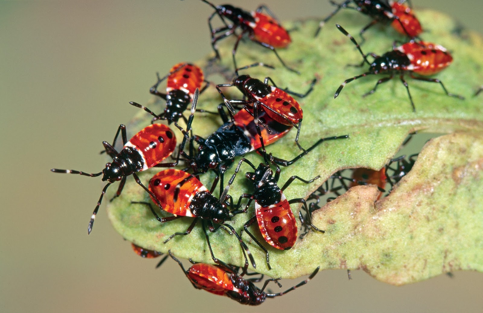 10 Very Common Garden Pests You Must Know About ! Garden Bible