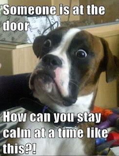 boxer funny dog meme