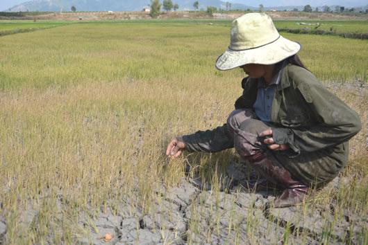 Gia Lai: Thiệt hại hơn 260 tỷ đồng vì hạn hán
