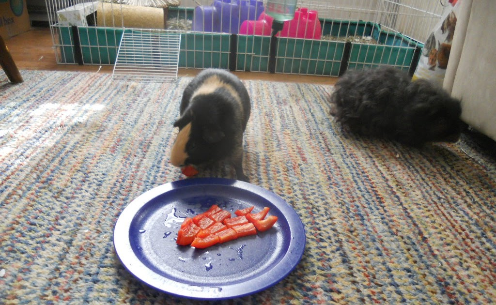What Kind Of Food Can Guinea Pigs Eat