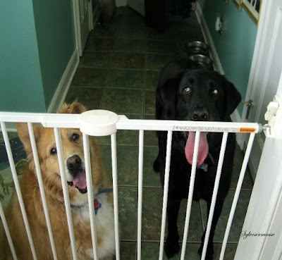 Indoor Dog Gates Reviewed